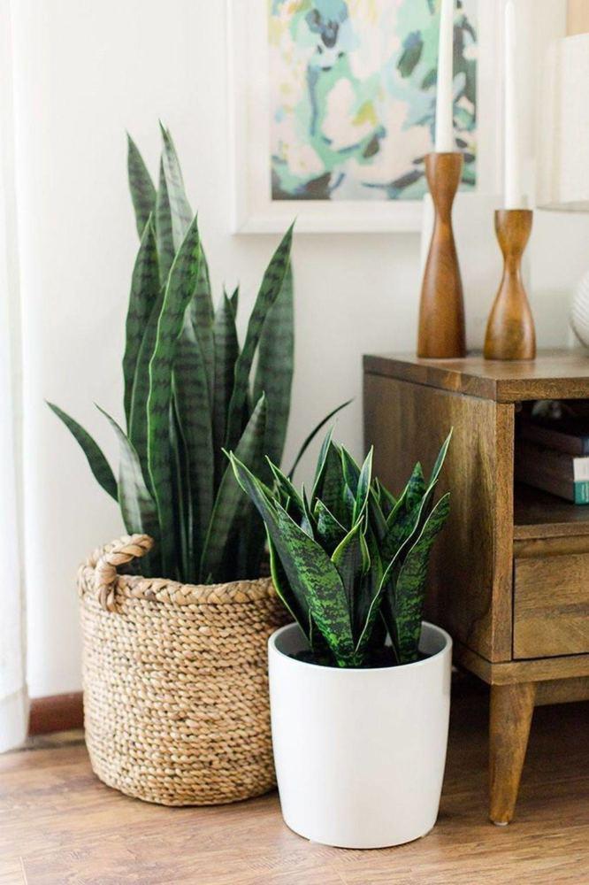 plantas en casa para respirar mejor y tener un ambiente limpio dentro de casa